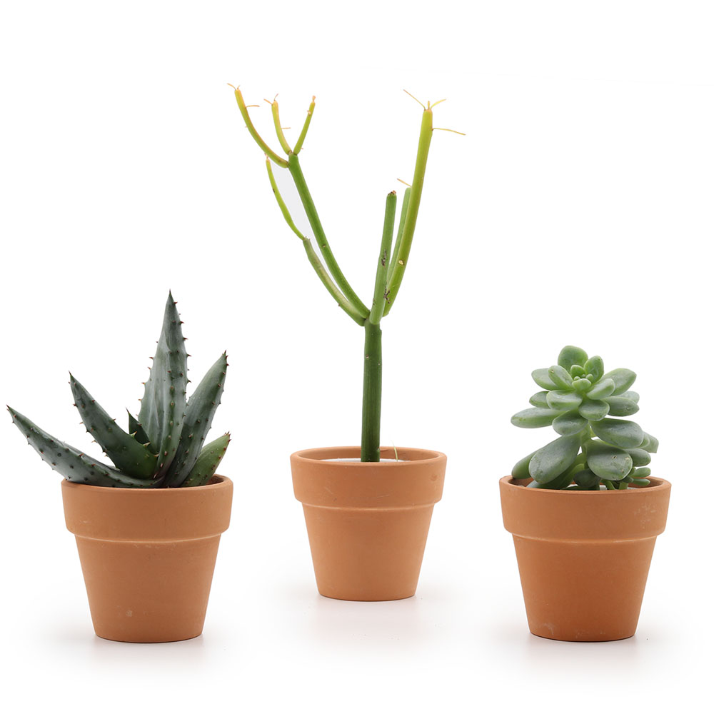 Terracotta Pot - 6.5 cm - set of 3