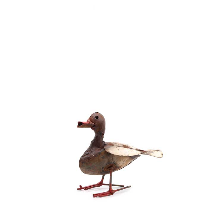 Domestic Duck - Small