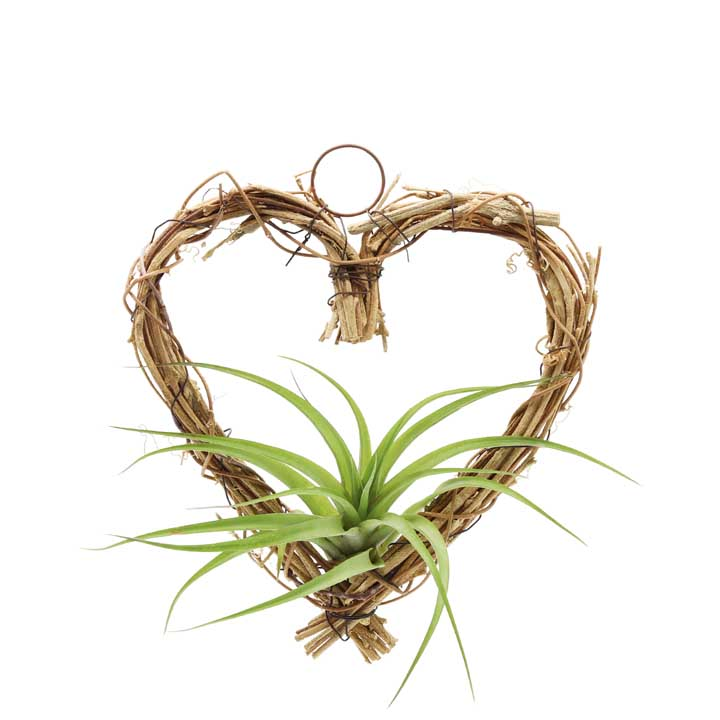 Wicker Heart & Plant - Large