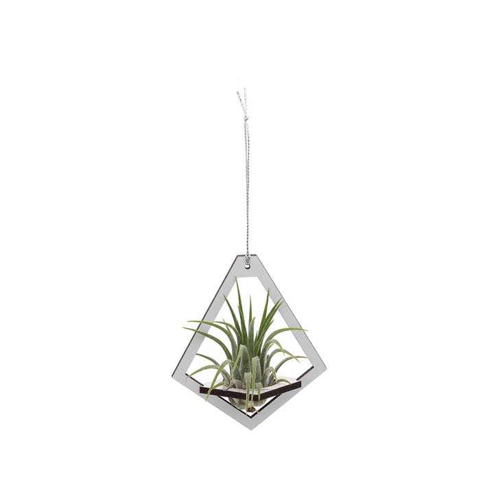 Air Plant Holder & Plant - Small - Teardrop