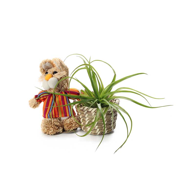Easter bunny with Air plant