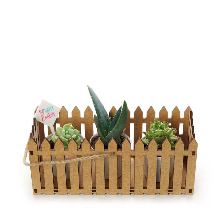 Trio of succulents in Fence holder