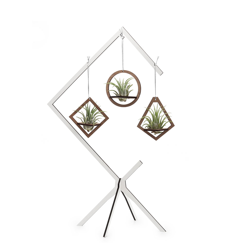 Hanging Air Plant Combo - set of 3